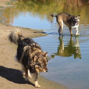 Simon and schuster at the rio grande