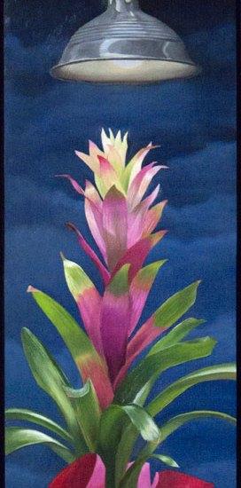 Pink and green Bromeliad under spotlight