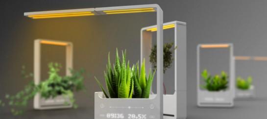 GROW PLANTS IN THE BABYLON LIGHT