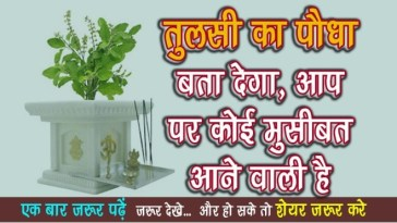 Tulsi plant will let you know about any trouble