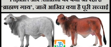 Flipkart And Amazon Sell Online Brahman Cows