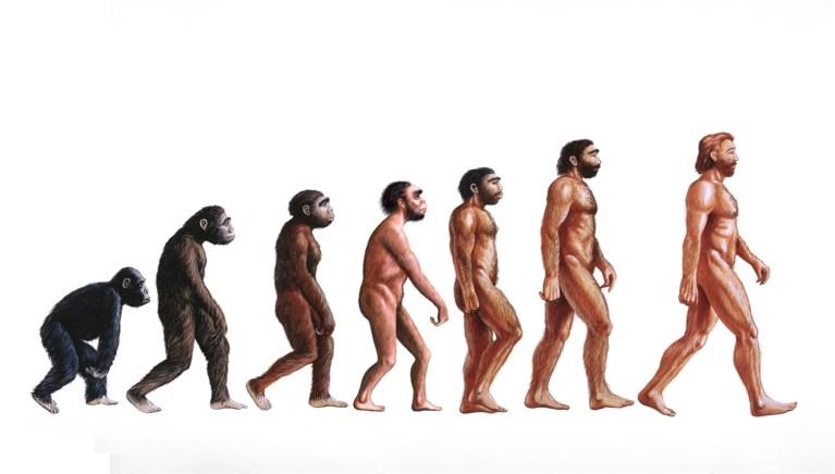 Homo sapiens__