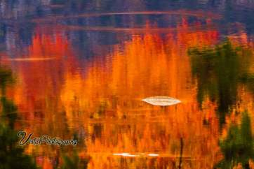 Lilly pond on Kancamagus highway reflecting fall colors