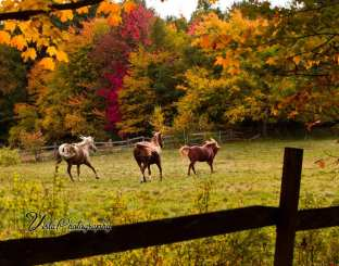playful horses with trees of red and yellow