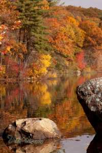 rocks in the pond with falls glorious foliage color reflecting on the water