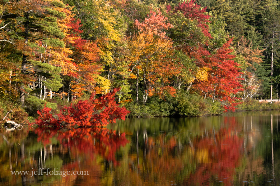 flame red Maple reflecting on Little Lake in Tamworth NH