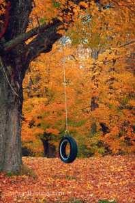Folger-tire-swing-maine-fall-foliage