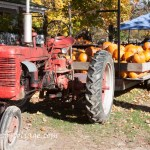 harvest time and new England