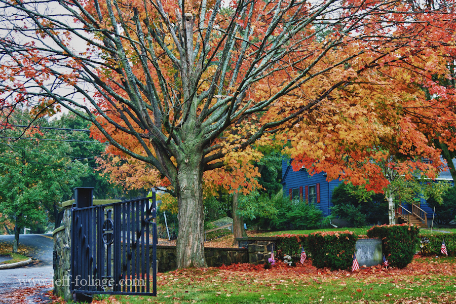 waterside Cemetery entrance with massive Maple tree and colorful fall colors