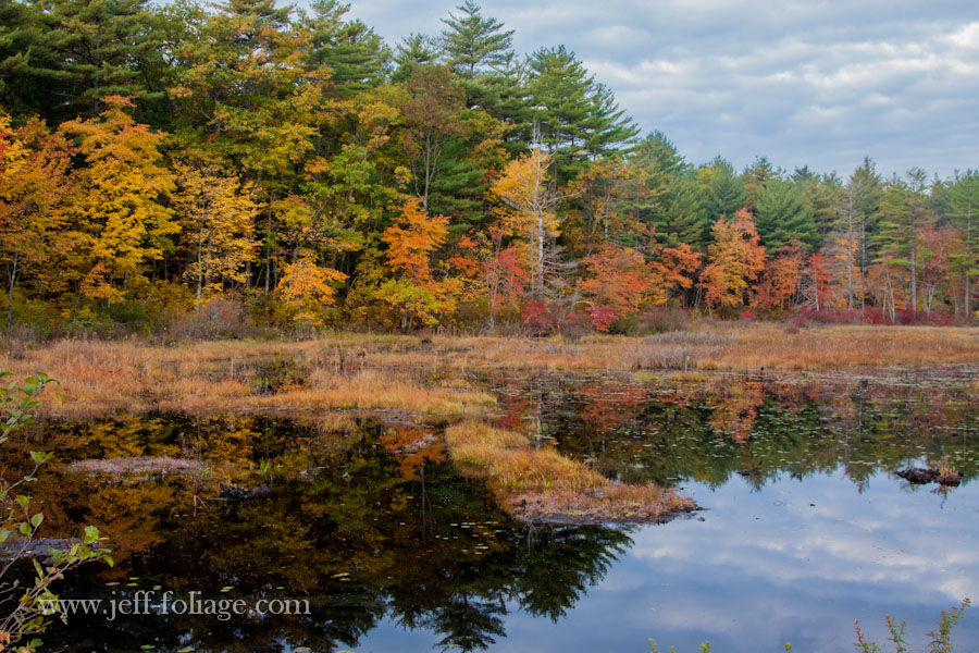 small pond reflecting fall foliage colors in the Harold Parker state forest