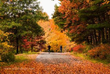 people out enjoying the New England fall foliage in Massachusetts.