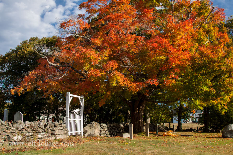 rock wall surrounds the Harpswell cemetery with a huge canopy of orange fall foliage hanging over the rock wall and cemetery