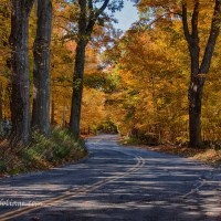 Tree lined road with fall foliage