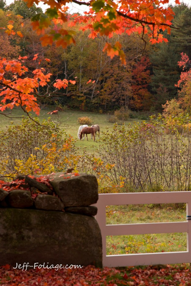 during the Autumn Festival you will find many scens just like this one where the fall foliage colors compliment a rustic farm scene.
