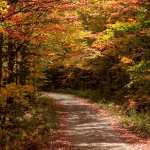 #Vistaphotography #JeffFolger, #JeffFoliage, fal foliage colors vacation planning and a small dirt road near Rangeley Lake in Maine on to October 2009