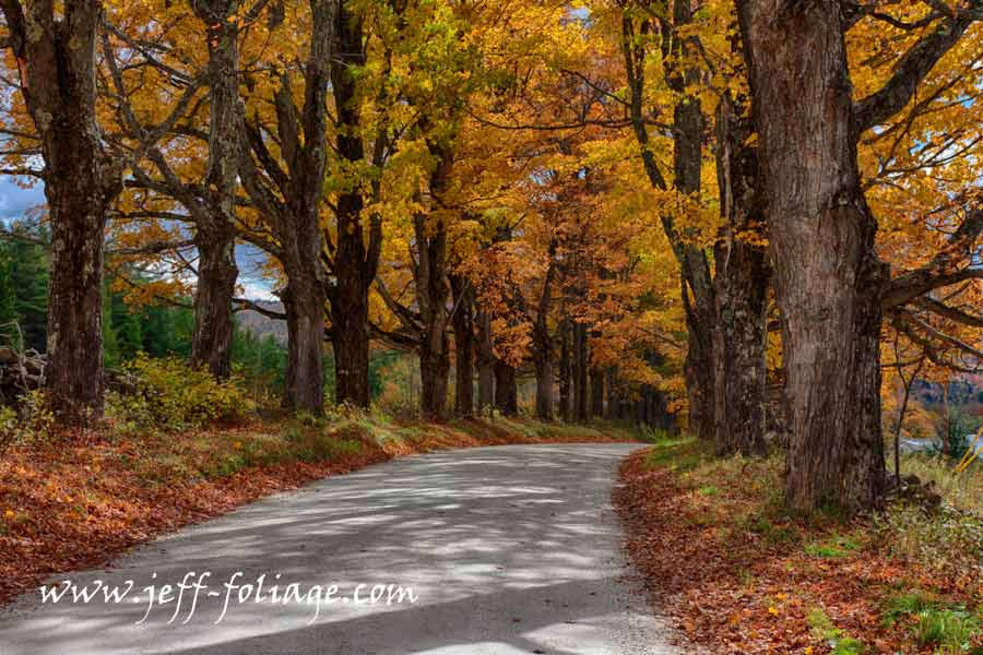 the fall colors of this maple tree road Experience autumn by traveling the backroads of Vermont searching for New England fall colors