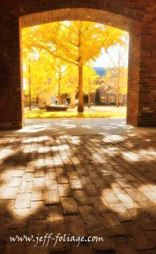 golden glowing fall colors through the archway. The salem Massachusetts fall colors let you experience Autumn