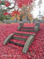 Carpet of red maple leaves