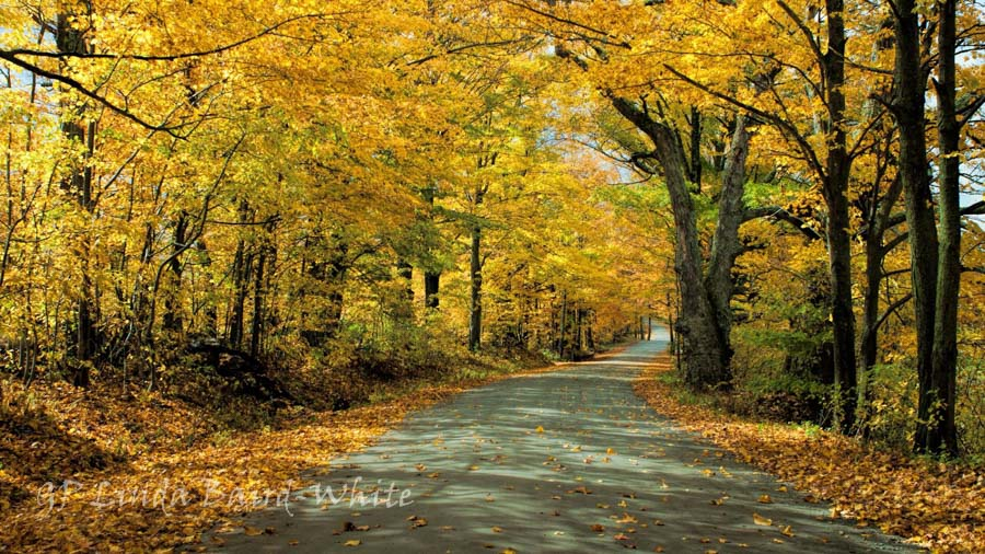 Vermont fall foliage covered road by Linda Baird-White