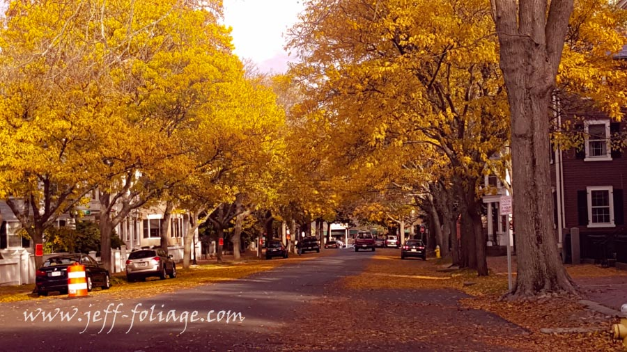 Golden leaves on Chestnut street in Salem