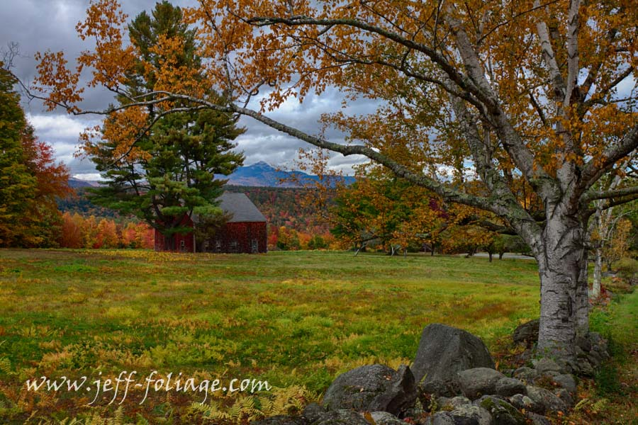 An autumn Review of Mount Chocorua through golden birch branches