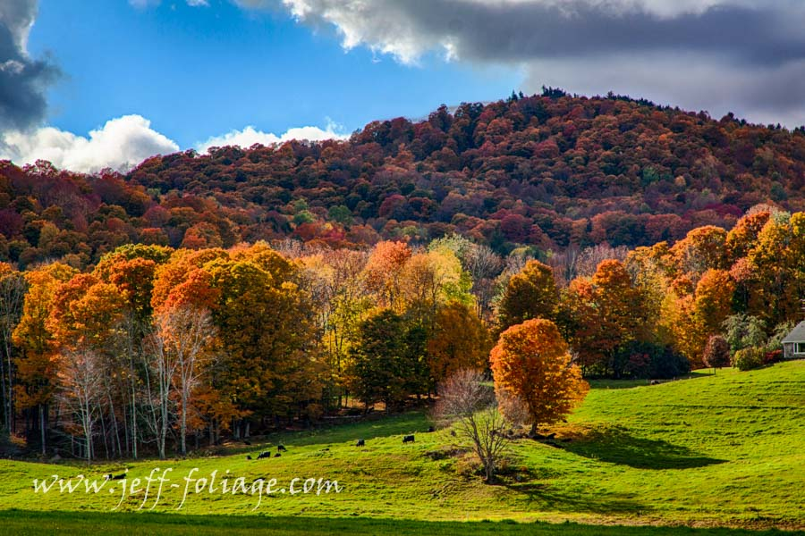Foggy Fall Wallpaper Vermont Fall Foliage Gallery