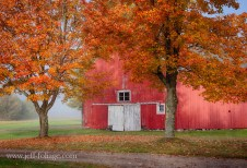 Red barn in the morning fog