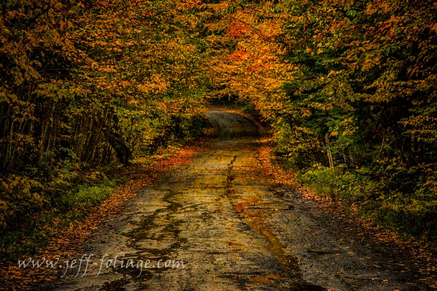 wet dirt road fall foliage reflections