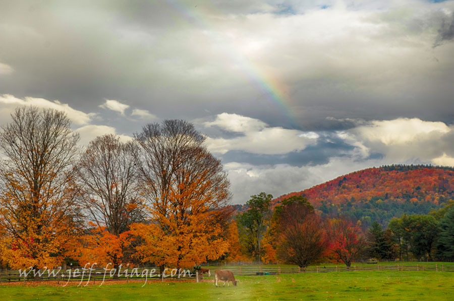 Marsh Billings farm in Woodstock Vermont under fall foliage