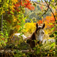 August Comment to Win-New England Fall Foliage