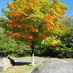 New England Photography of fall foliage