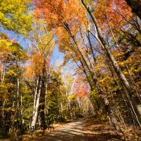 Winner Fall Foliage Comment to Winner
