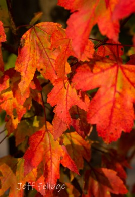 Best time for fall foliage in New England - New England fall foliage