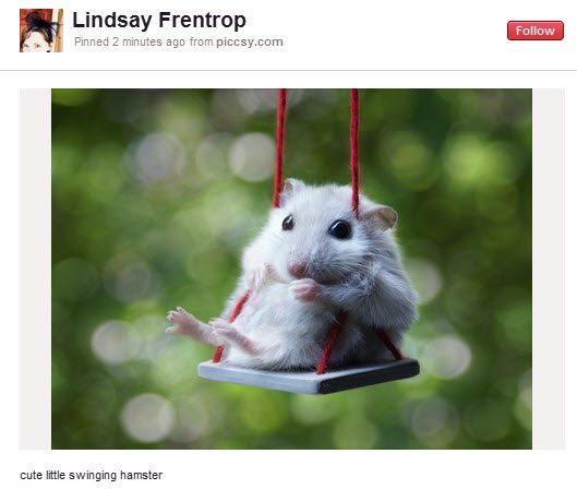 Pinterest Hamster