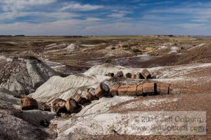 Petrified Forest0206