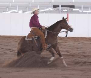 scottsdale realtor,carefree horse property realtor,cave creek horse property realtor,scottsdale horse property realtor