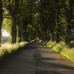 A rural road, lined by tall grass with trees overhanging