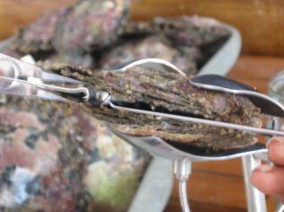 anapas-perles-black-pearl-farm-14_213832254_o