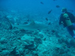 second-dive---reef-and-shark-dive-11_213815881_o