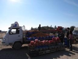 An orange vendor in Harran