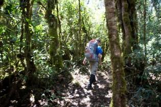 hiking-through-the-jungle_5000549944_o