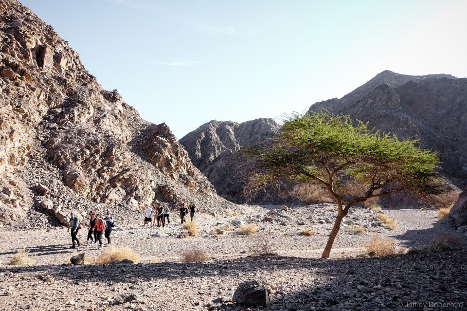 Hiking witin half a mile of the Egyptian border in Eilat, Israel. The desert blooms brilliantly after each rare rain.