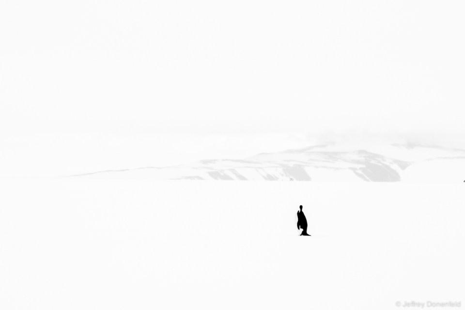 DSC01273-2014-12-13 Biking to Penguin-Donenfeld-1600-WM