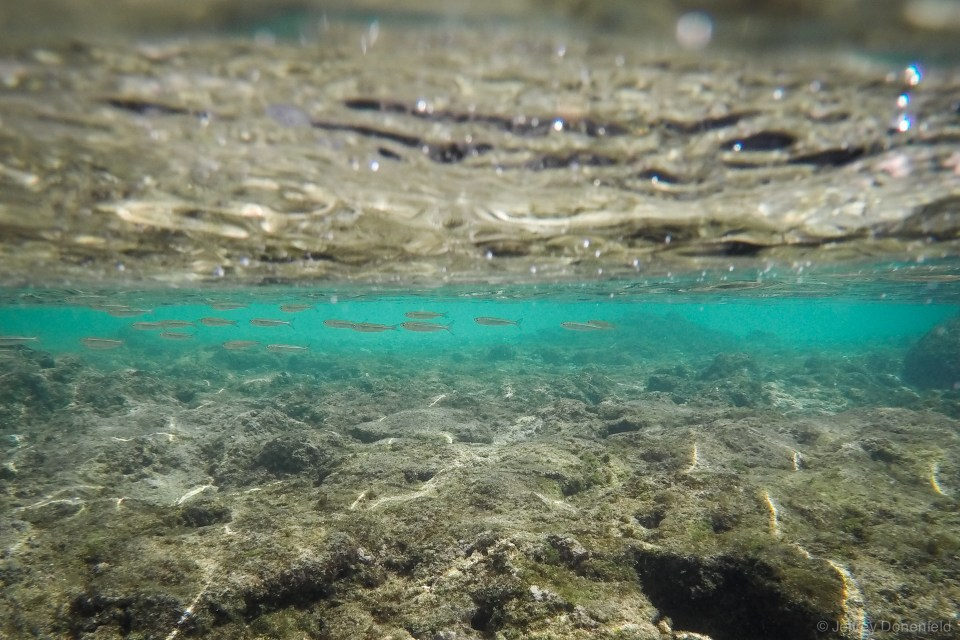 Small fish swim in the shallow tidal pools of the hidden coves in El NIdo.