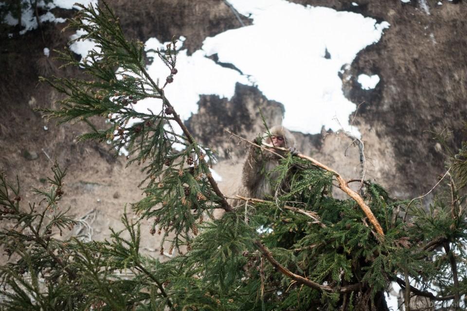 Naturally, monkeys climb trees too.