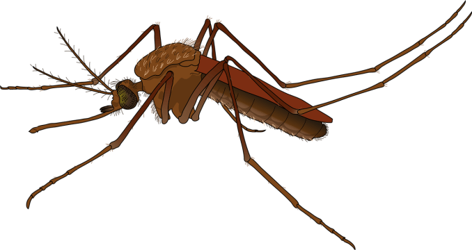 Illustration of mosquito
