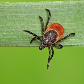 Lyme disease sucks — 5 tips for minimizing risk  when you hike