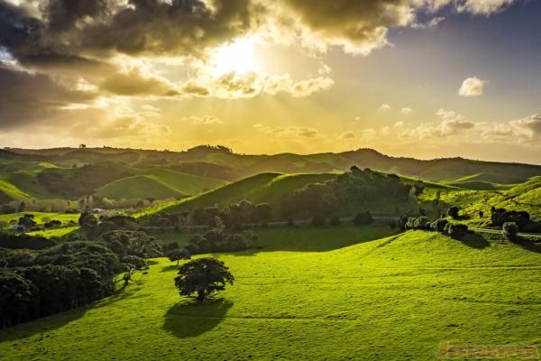 beautiful landscape in waiheke