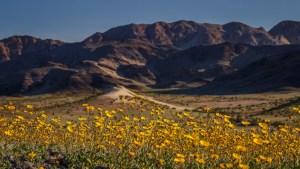 spring in Death Valley