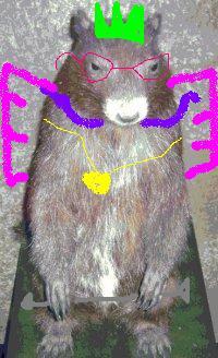 marmotenhanced